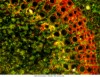 Mikroskop Delta Optical Genetic Pro Bino + wbudowana kamera 1.3MP USB