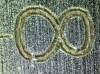 fragment suwmiarki, 40x